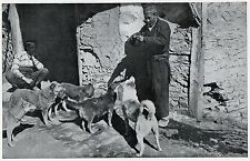 C4570 Cani randagi di Costantinopoli - Stampa d'epoca - 1931 Vintage print
