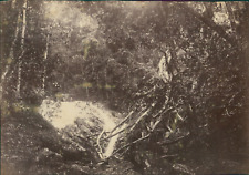Nouvelle Calédonie, La Brousse (Grande Terre). Nouvelles Hybrides  Vintage album