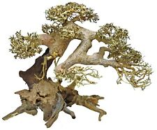 Superfish Bonsai Tree Driftwood Decoration for Aquariums Real Driftwood Small