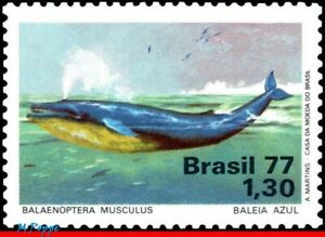 1510 BRAZIL 1977 BLUE WHALE, PROTECTION OF MARINE LIFE,SEA MAMMALS,MI# 1597,MNH