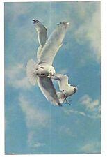 Sea Gulls Fighting Over Herring Fish Mouth Waterfowl Flight Water Bird Postcard