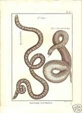 Acrocorde de Java & Roll Snakes 1789 Bonnaterre