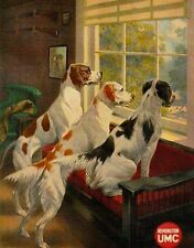 ANTIQUE UMC 8X10 PHOTOGRAPH PRINT 2 ENGLISH SETTERS ENGLISH POINTER AT WINDOW