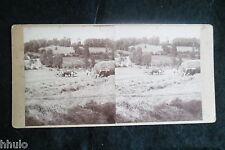 STB087 Vache charue ferme foin moisson paille vintage photo STEREO amateur