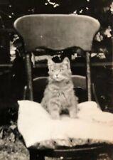 Vintage Photo Circa 1920-1930'S Tabby Cat Kitty LA CA Posing On Chair Adorable
