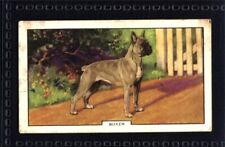 Gallaher Dogs 2nd Series 1938 - Boxer No. 13