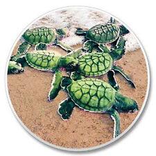 Sea Turtle Babies Auto Coasters