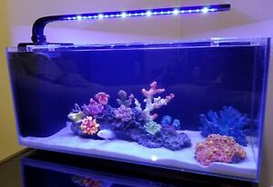 FISH TANK MODERN FRAMELESS DESIGN (10 Gallon)