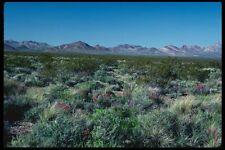 143043 Death Valley Amargosa Desert A4 Photo Print
