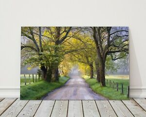 cades cove scenic landscape road through trees canvas picture print
