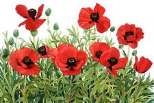 Red Poppy Note Cards #2 Set of Four 5 x 7 Blank Watercolor Reproductions