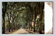 New Bedford MA, Tree Lined Hawthorn St, Buggy Vintage Massachusetts Postcard