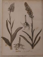 Orchis: A spotted Orchis: Encyclopaedia Londinensis V.17
