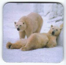 Kühlschrank - Magnet: zwei faulenzende Eisbären - two lazy Polar Bears