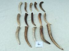 15 Red Deer Antler Tines for Crafts, Jewellery, Pagan No.4