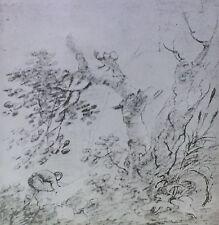 """Tree Stems"", Richard Wilson, Magic Lantern Glass Slide"