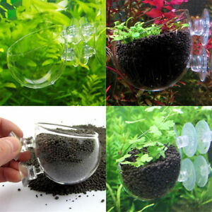 Set of 2,   Tank Decor Aquatic Plant Crystal Glass Planter Suction Cup