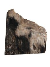 Polished Petrified Wood Slice From Nevada, Immaculate Condition!