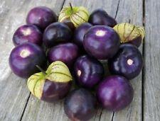 50 Graines de Tomatillo du Mexique Pourpre, Physalis Ixocarpa Purple seeds