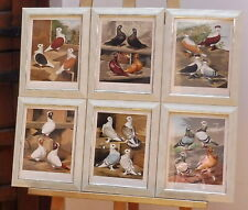 More details for 6 victorian cassells pigeon book prints set 2 free shipping england