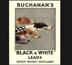 Vintage Buchanans Whisky Print, Greyhound Print, Quality Print A5 to A1