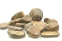 Axinite 20mm Qty1 Tumbled Stone Military Reiki Healing Crystal by Cisco Traders