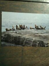 STELLER SEA LION VANCOUVER ISLAND BRITISH COLUMBIA VINTAGE PHOTO POST CARD