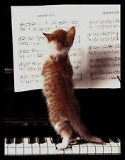 491-Msa John Daniels Cat Kitten Blank Greeting Note Card New