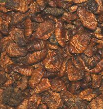 Seidenraupen Koifutter Leckerlie Teichfutter Eiweißfutter 2 kg