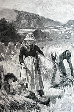King Agricultural Scenes August REAPING BINDING HAY 1886 Antique Matted Print