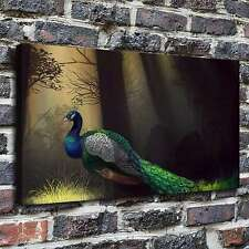 Beautiful peacock Paintings HD Print on Canvas Home Decor Wall Art Pictures