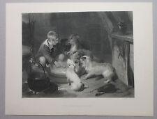 Breakfast Party For Dogs Deerhound Terriers Collie & Boy Antique Art Print 1888