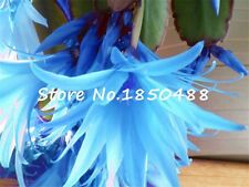 100Pcs/Lot Schlumbergera seeds crab cactus sementes potted balcony plant Mixed