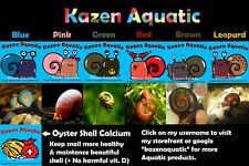 11+ Blue Leopard Ramshorn Snails + FREE sample size calcium. Great aquarium pet