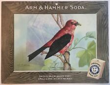 Birds - Arm & Hammer Advertising Store Display Card Sign - Scarlet Tanager J5
