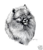 Keeshond Dog Drawing Art 13 X 17 Large Print by Artist Djr