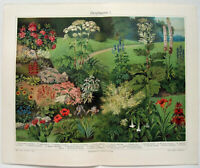 Ornamental Plants I - Original 1905 Chromo-Lithograph by Meyers. Antique