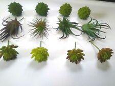 Miniature Succulent Picks Artificial Fairy Garden Crafts 12 Pieces