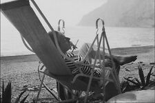 679006 Tennessee Williams 1956 182755 A4 FOTO STAMPA