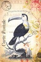 Postcard French Vintage Shabby Chic Style, Toucan, Bird, Floral, 4K