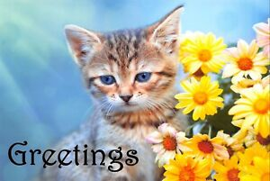 PACK of 3 New Greetings Postcards, Showing Cute Kitten and Yellow Flowers