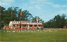 c1950s Nick's Indian Gift Shop/Texaco Station, Onamia, Minnesota Postcard