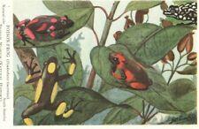 VINTAGE BRITISH MUSEUM postcard:  POISON FROG K4