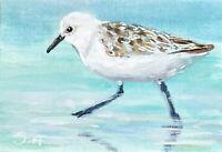 ACEO Miniature Painting, Bird Sanderling shorebird shore sea Sandpiper print atc