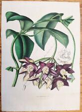 van Houtte Garden Flowers Large Print Hoya Imperialis 1847 (NS)