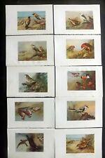 Archibald Thorburn 1925 Lot of 10 Vintage Bird Prints. Book Plates