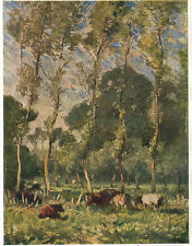 Cows at Rest in Pasture - France - 1913 Vintage Print - Frank Mura