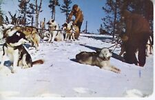 Dog Dogs Dogsled Sledding, Souvenir Of The Bay, Hudson's Bay, Canada Postcard