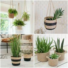 Seagrass Hanging Planter Plant Pot - Eco Friendly House Plant - Jute - Succulent