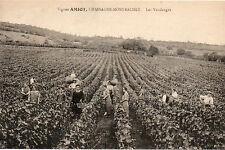 carte postale Côte d'Or 21  Chassagne Montrachet Vignes Amiot Vendanges Beaune